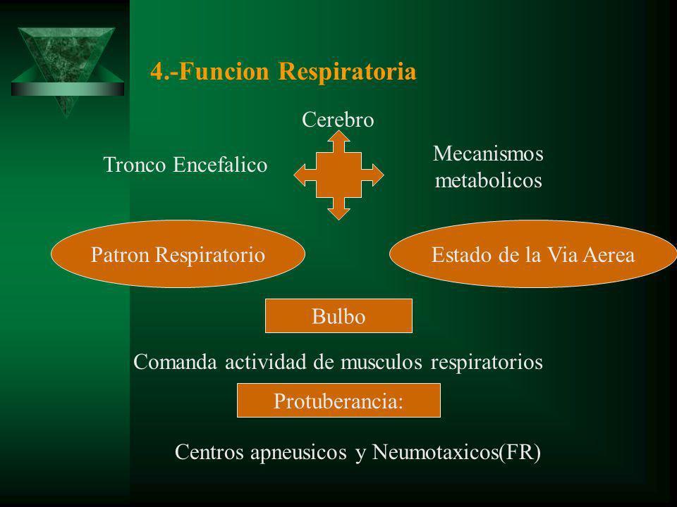 4.-Funcion Respiratoria Patron RespiratorioEstado de la Via Aerea Cerebro Tronco Encefalico Mecanismos metabolicos Bulbo Protuberancia: Comanda actividad de musculos respiratorios Centros apneusicos y Neumotaxicos(FR)