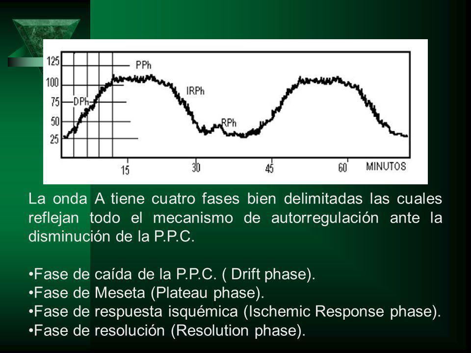 La onda A tiene cuatro fases bien delimitadas las cuales reflejan todo el mecanismo de autorregulación ante la disminución de la P.P.C. Fase de caída