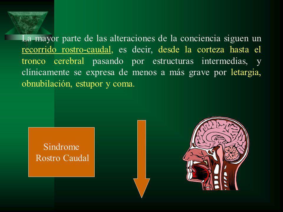 La mayor parte de las alteraciones de la conciencia siguen un recorrido rostro-caudal, es decir, desde la corteza hasta el tronco cerebral pasando por