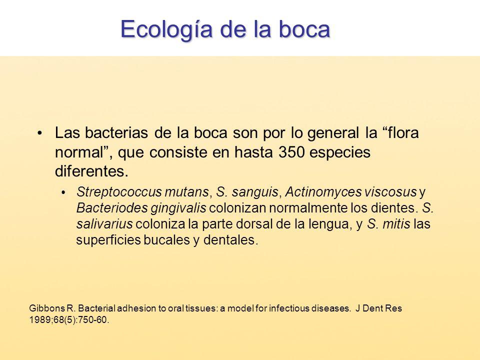 Ecología de la boca Las bacterias de la boca son por lo general la flora normal, que consiste en hasta 350 especies diferentes. Streptococcus mutans,