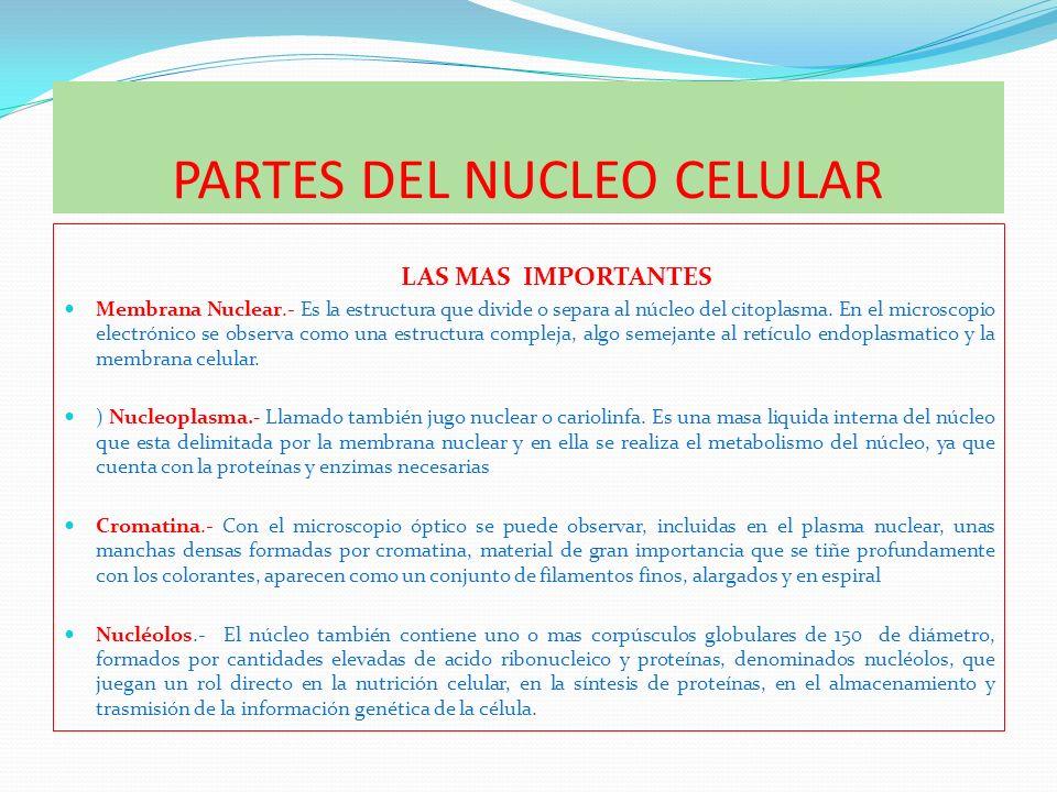 PARTES DEL NUCLEO CELULAR LAS MAS IMPORTANTES Membrana Nuclear.- Es la estructura que divide o separa al núcleo del citoplasma. En el microscopio elec