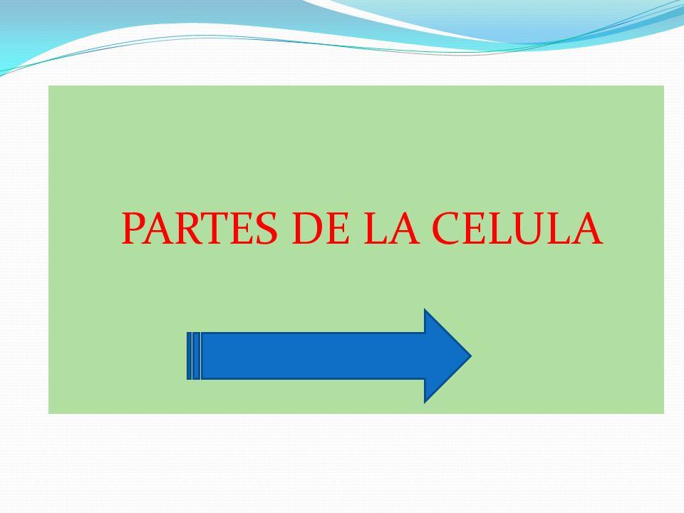 PARTES DE LA CELULA