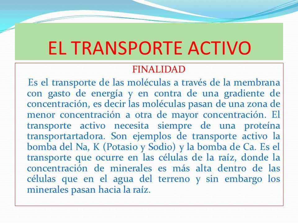 EL TRANSPORTE ACTIVO FINALIDAD Es el transporte de las moléculas a través de la membrana con gasto de energía y en contra de una gradiente de concentr