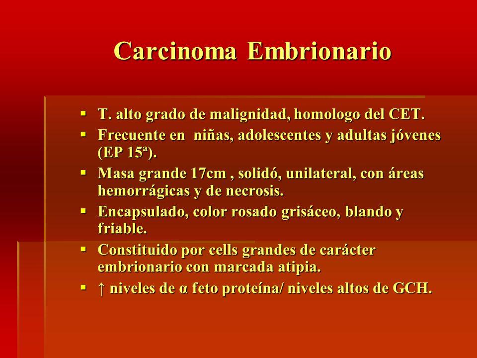 Carcinoma Embrionario T. alto grado de malignidad, homologo del CET. T. alto grado de malignidad, homologo del CET. Frecuente en niñas, adolescentes y