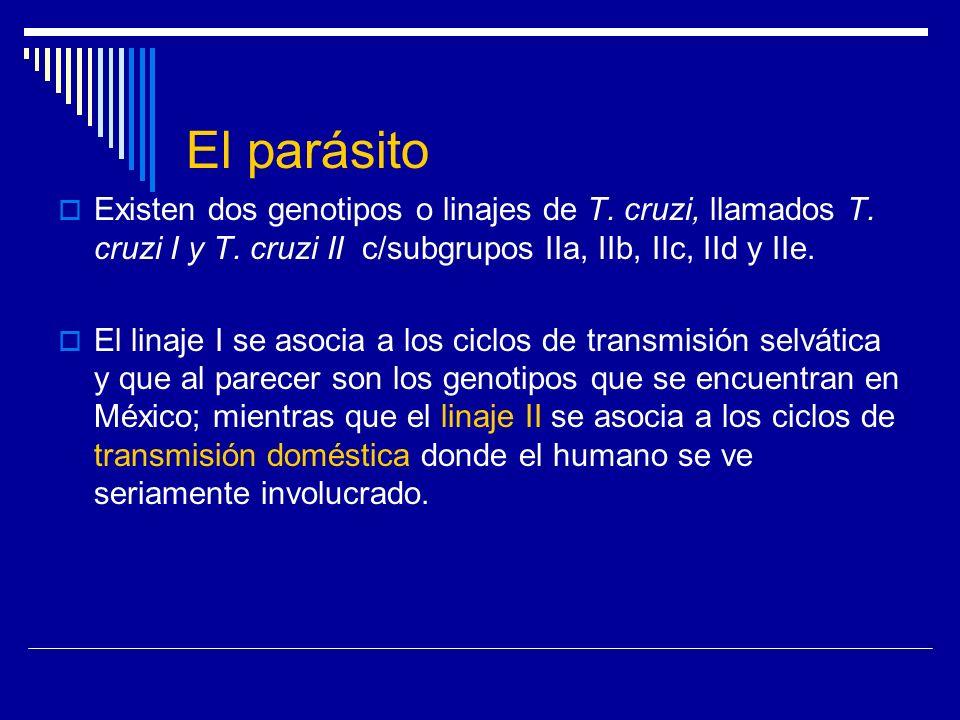 El parásito Existen dos genotipos o linajes de T. cruzi, llamados T. cruzi I y T. cruzi II c/subgrupos IIa, IIb, IIc, IId y IIe. El linaje I se asocia