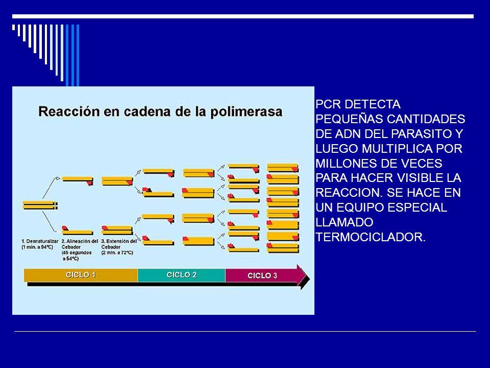 PCR DETECTA PEQUEÑAS CANTIDADES DE ADN DEL PARASITO Y LUEGO MULTIPLICA POR MILLONES DE VECES PARA HACER VISIBLE LA REACCION. SE HACE EN UN EQUIPO ESPE