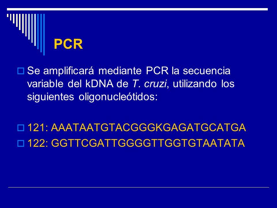 PCR Se amplificará mediante PCR la secuencia variable del kDNA de T. cruzi, utilizando los siguientes oligonucleótidos: 121: AAATAATGTACGGGKGAGATGCATG