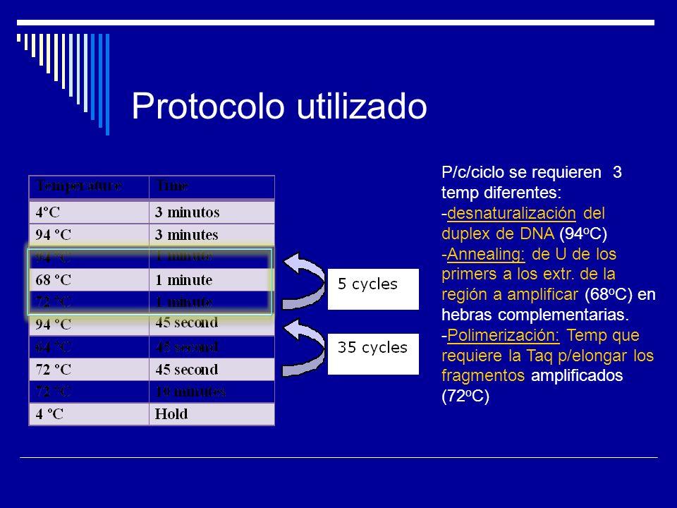 Protocolo utilizado P/c/ciclo se requieren 3 temp diferentes: -desnaturalización del duplex de DNA (94 o C) -Annealing: de U de los primers a los extr