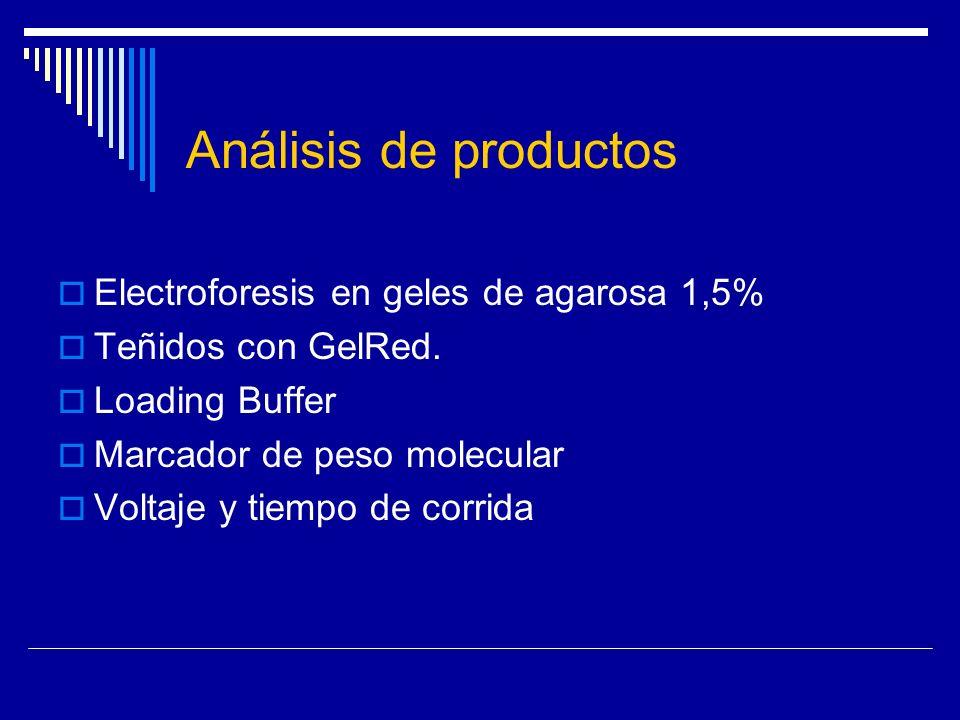 Análisis de productos Electroforesis en geles de agarosa 1,5% Teñidos con GelRed. Loading Buffer Marcador de peso molecular Voltaje y tiempo de corrid