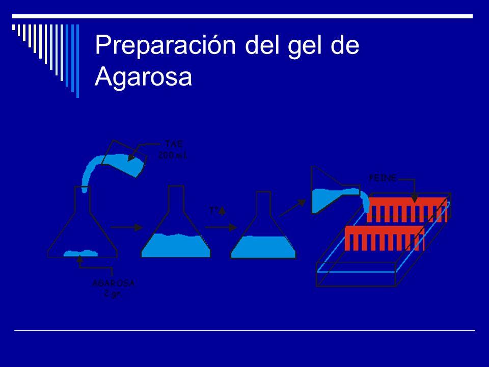 Preparación del gel de Agarosa