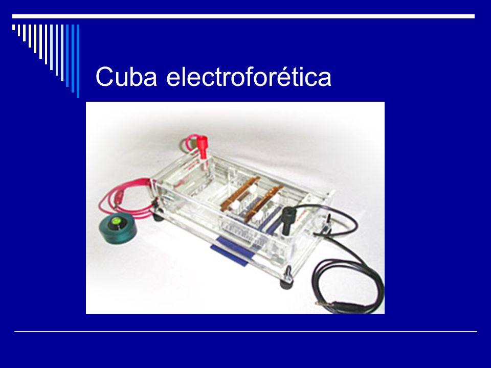 Cuba electroforética