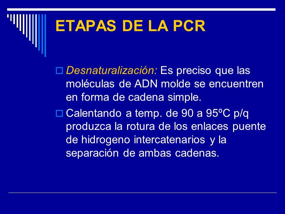 ETAPAS DE LA PCR Desnaturalización: Es preciso que las moléculas de ADN molde se encuentren en forma de cadena simple. Calentando a temp. de 90 a 95ºC