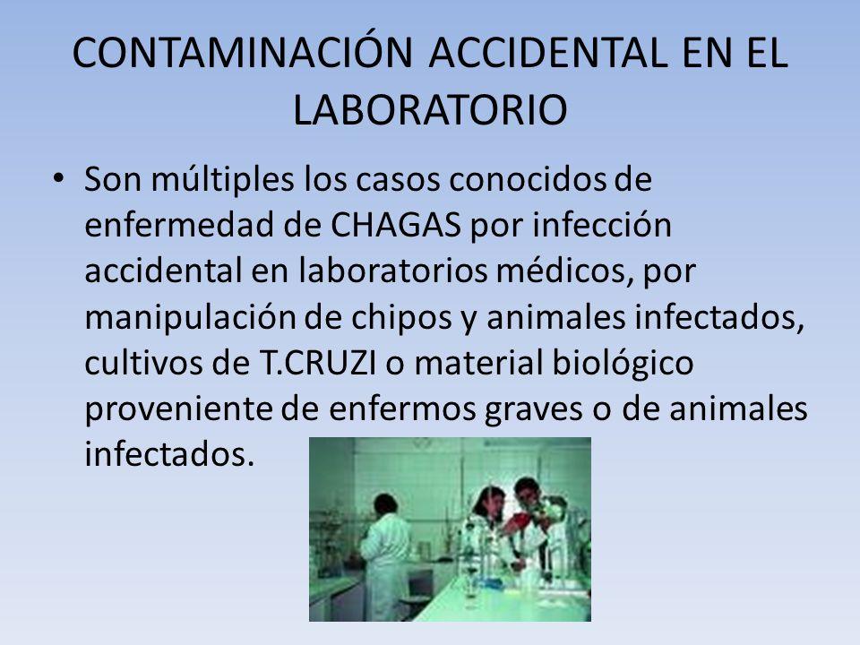 CONTAMINACIÓN ACCIDENTAL EN EL LABORATORIO Son múltiples los casos conocidos de enfermedad de CHAGAS por infección accidental en laboratorios médicos,