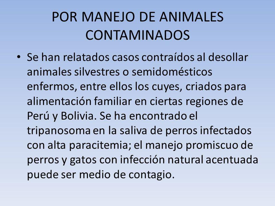 POR MANEJO DE ANIMALES CONTAMINADOS Se han relatados casos contraídos al desollar animales silvestres o semidomésticos enfermos, entre ellos los cuyes