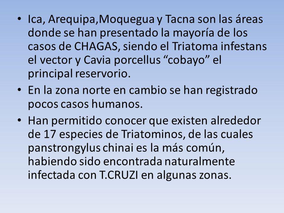 Ica, Arequipa,Moquegua y Tacna son las áreas donde se han presentado la mayoría de los casos de CHAGAS, siendo el Triatoma infestans el vector y Cavia