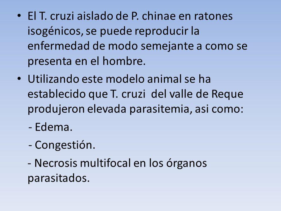 El T. cruzi aislado de P. chinae en ratones isogénicos, se puede reproducir la enfermedad de modo semejante a como se presenta en el hombre. Utilizand