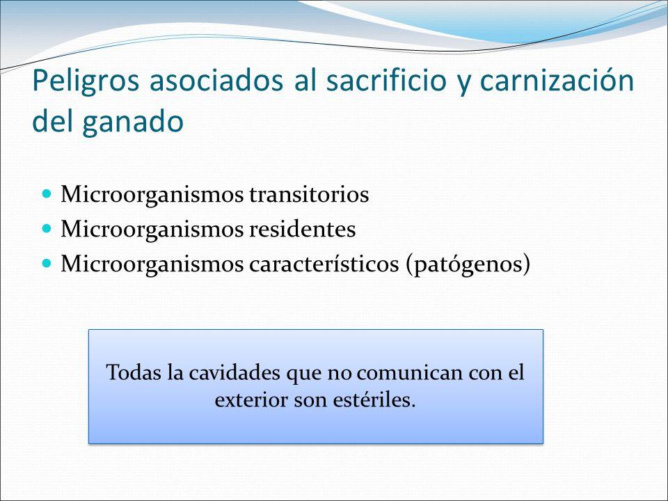 Peligros asociados al sacrificio y carnización del ganado Microorganismos transitorios Microorganismos residentes Microorganismos característicos (pat