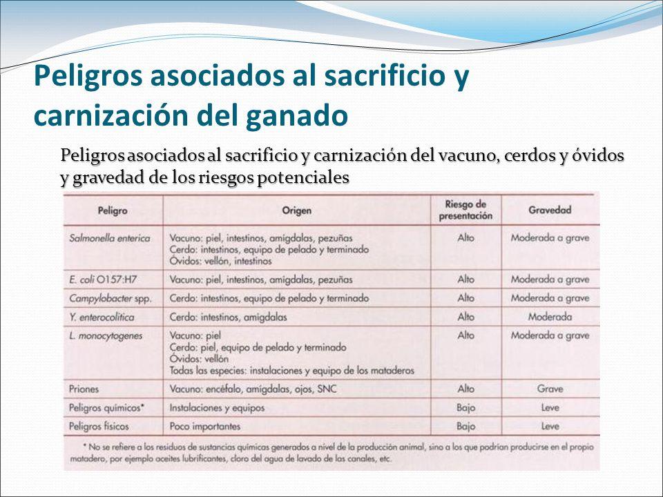 Peligros asociados al sacrificio y carnización del ganado Cuantía de la contaminación superficial de las canales Vacuno: 10 3 - 10 4 ufc/cm 2Piel Vacuno y Corderos 10 5 ufc/cm 2 Ovejas y cerdos 10 8 ufc/cm 2 Peligros asociados a la contaminación superficial Sanitarios Alteraciones del producto 10 7 - 10 8 ufc/cm 2 Identificar las operaciones en las que los microorganismos llegan a las canales Aplicar medidas correctivas