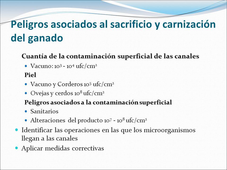 Peligros asociados al sacrificio y carnización del ganado Cuantía de la contaminación superficial de las canales Vacuno: 10 3 - 10 4 ufc/cm 2Piel Vacu
