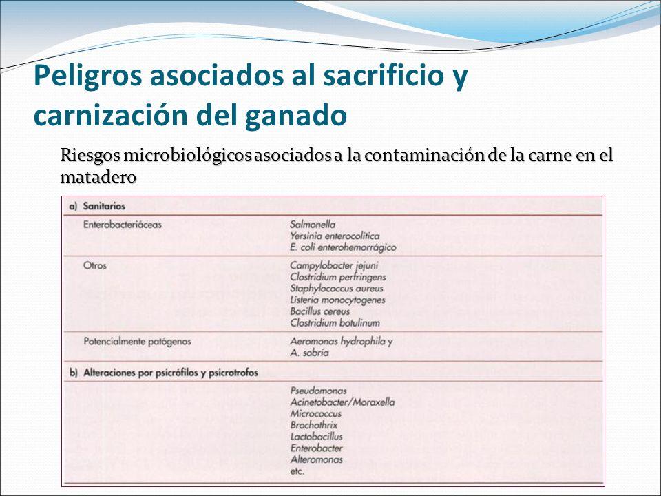 Peligros asociados al sacrificio y carnización del ganado Riesgos microbiológicos asociados a la contaminación de la carne en el matadero