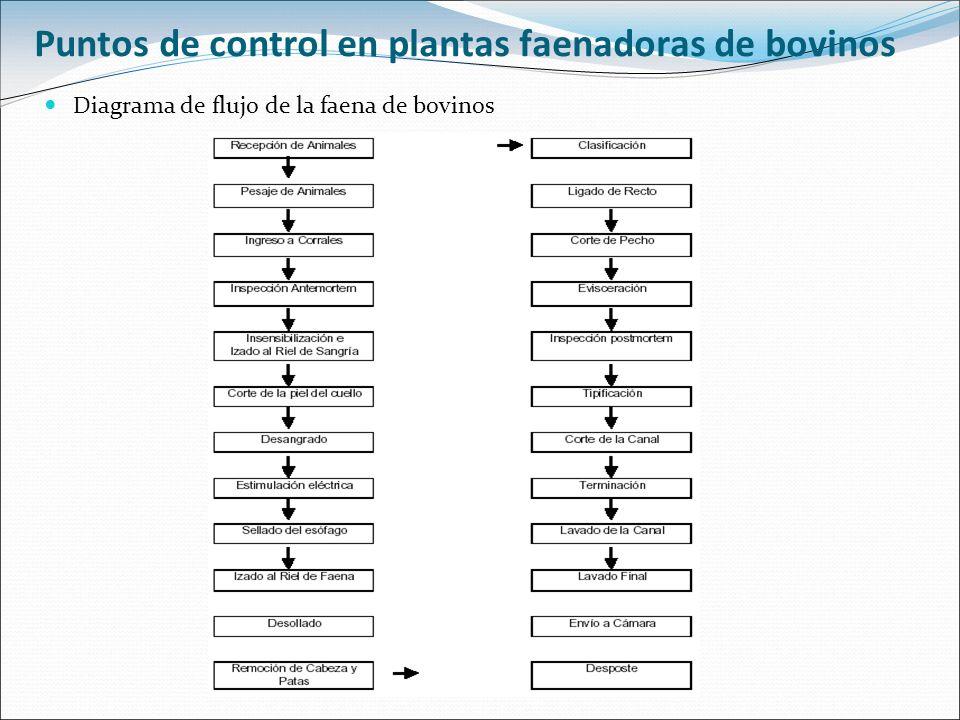 Puntos de control en plantas faenadoras de bovinos Diagrama de flujo de la faena de bovinos
