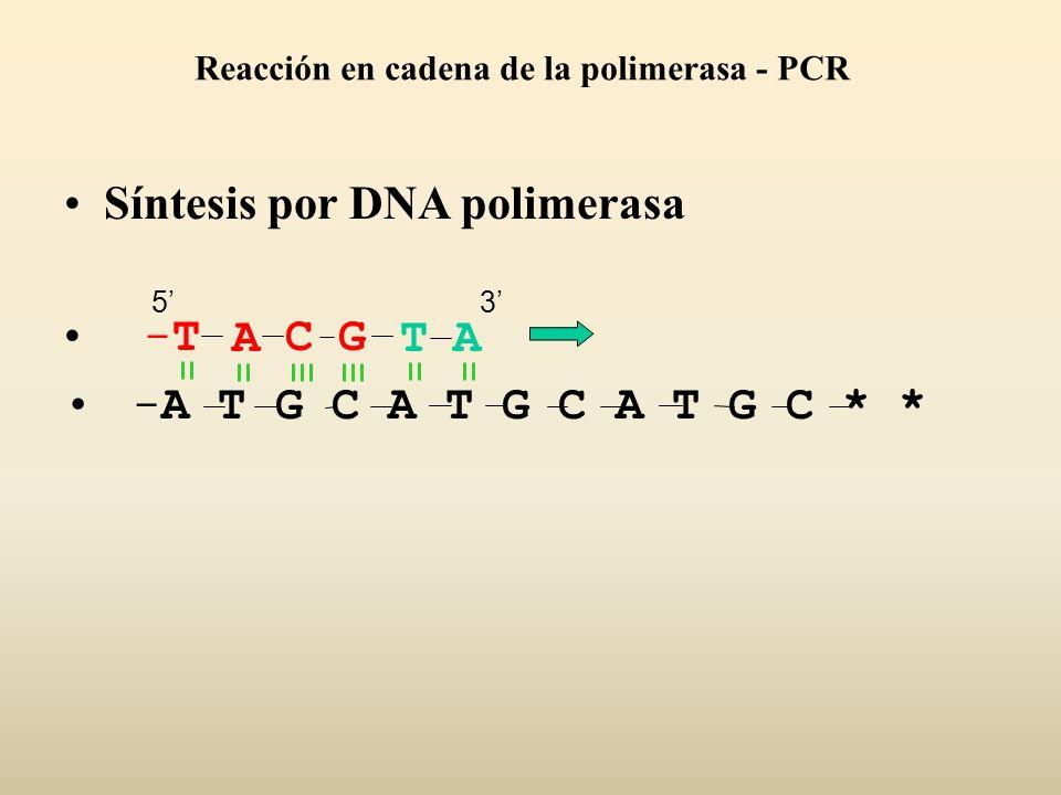 Síntesis por DNA polimerasa -A T G C A T G C A T G C * * ACGT-T-TA 53 Reacción en cadena de la polimerasa - PCR