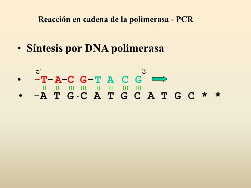 Síntesis por DNA polimerasa -A T G C A T G C A T G C * * ACGT-T-TACG Reacción en cadena de la polimerasa - PCR 53
