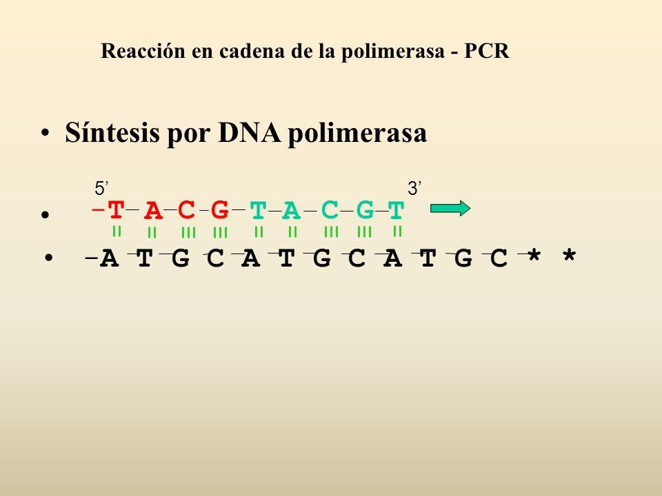 Síntesis por DNA polimerasa -A T G C A T G C A T G C * * ACGT-T-TACGT Reacción en cadena de la polimerasa - PCR 53