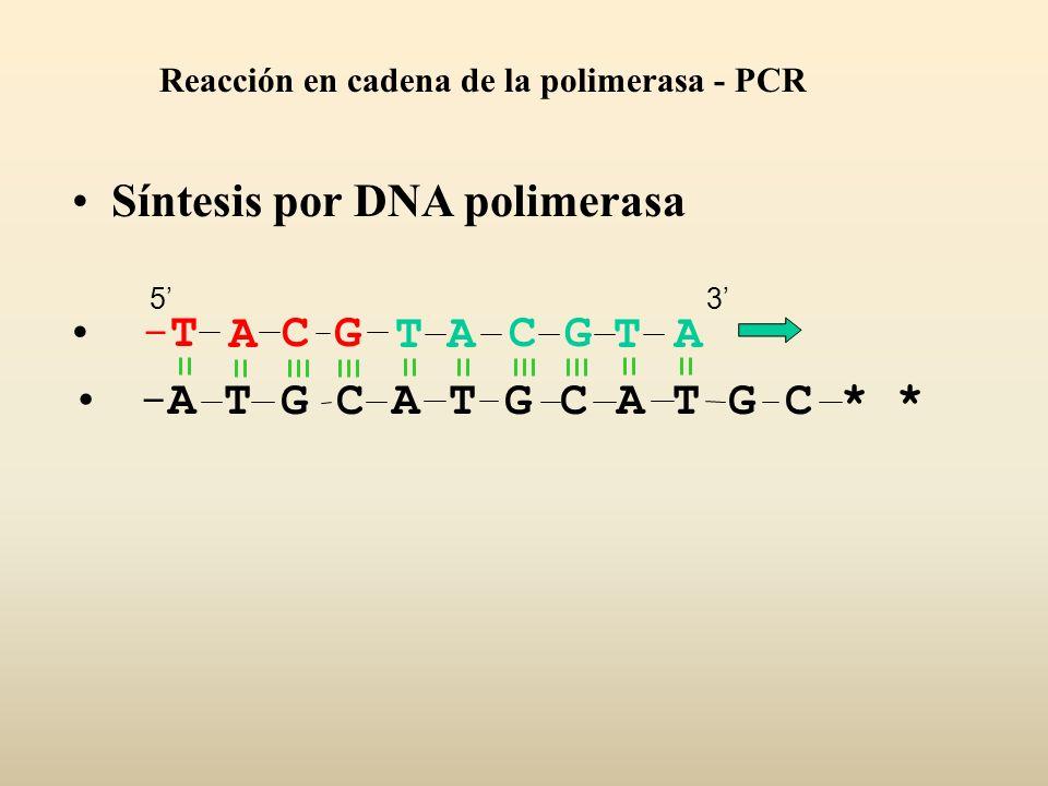 Síntesis por DNA polimerasa -A T G C A T G C A T G C * * ACGT-T-TACGTA Reacción en cadena de la polimerasa - PCR 53