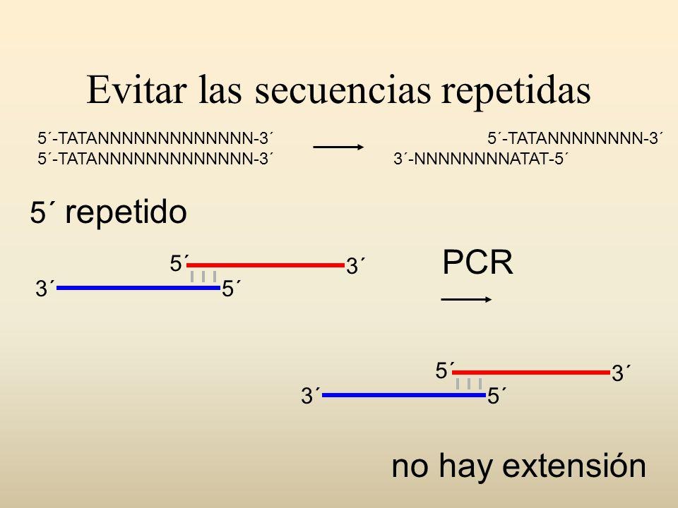 Evitar las secuencias repetidas 5´ 3´ no hay extensión PCR 5´ repetido 5´-TATANNNNNNNNNNNNN-3´ 5´-TATANNNNNNNN-3´ 3´-NNNNNNNNATAT-5´ 5´ 3´