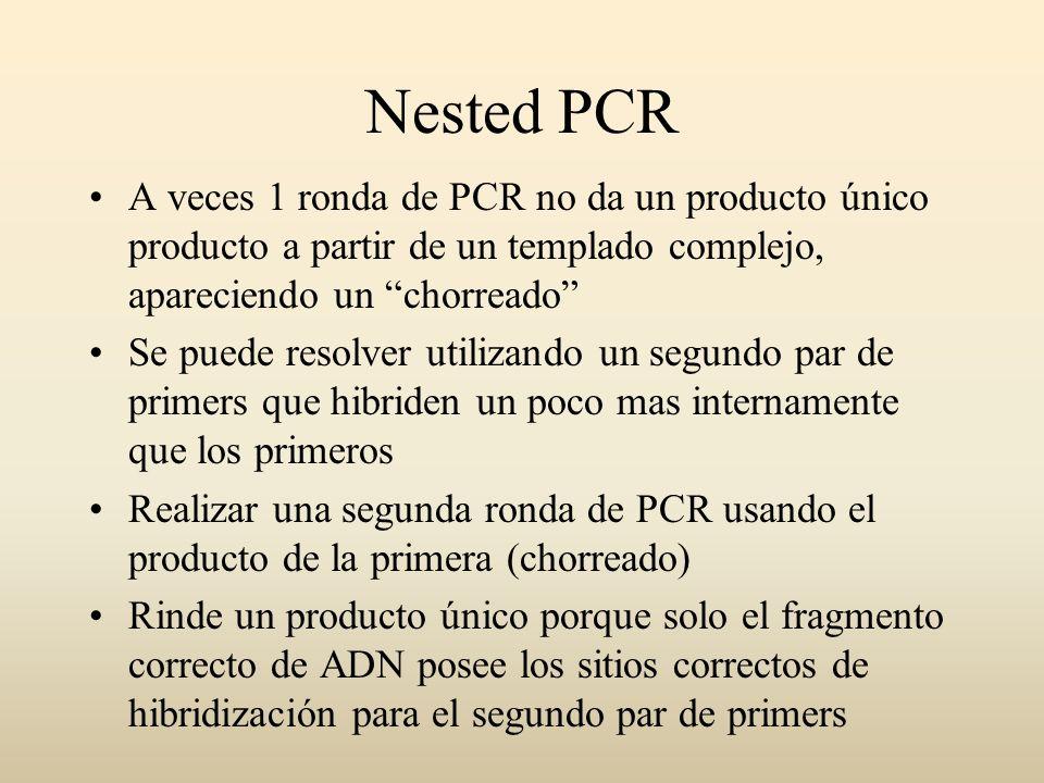 Nested PCR A veces 1 ronda de PCR no da un producto único producto a partir de un templado complejo, apareciendo un chorreado Se puede resolver utiliz
