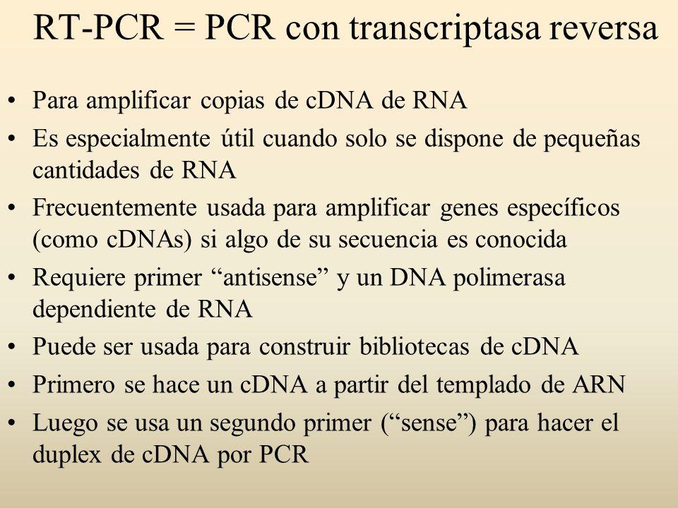 Para amplificar copias de cDNA de RNA Es especialmente útil cuando solo se dispone de pequeñas cantidades de RNA Frecuentemente usada para amplificar