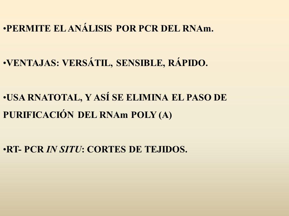 PERMITE EL ANÁLISIS POR PCR DEL RNAm. VENTAJAS: VERSÁTIL, SENSIBLE, RÁPIDO. USA RNATOTAL, Y ASÍ SE ELIMINA EL PASO DE PURIFICACIÓN DEL RNAm POLY (A) R