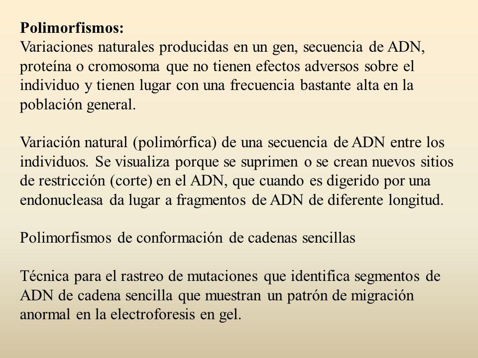 Polimorfismos: Variaciones naturales producidas en un gen, secuencia de ADN, proteína o cromosoma que no tienen efectos adversos sobre el individuo y