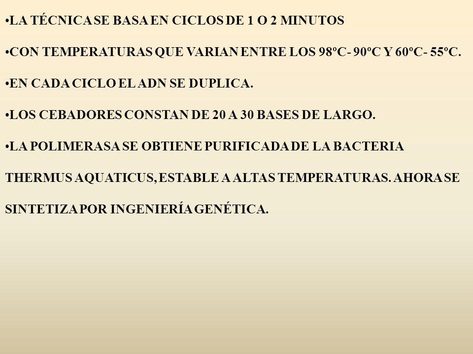 LA TÉCNICA SE BASA EN CICLOS DE 1 O 2 MINUTOS CON TEMPERATURAS QUE VARIAN ENTRE LOS 98ºC- 90ºC Y 60ºC- 55ºC. EN CADA CICLO EL ADN SE DUPLICA. LOS CEBA