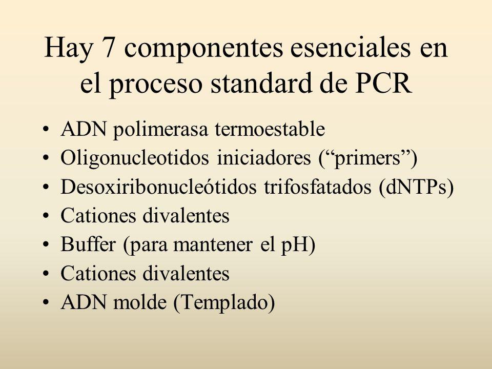 El ciclo de PCR Desnaturalización - 94-95°C por 45 segundos si G+C < 55% Temperatura de hibridización (Annealing) – debe ser calculada o determinada empiricamente para cada par de primers demasiado alta = poco o nada de producto demasiado baja = annealing no específico = productos incorrectos Extensión - a la temperatura óptima de la ADN polimerasa utilizada ej.: 72°C para Taq 1 min/kb de longitud, dado que la Taq polimeriza 2000 pb/min solo a partir del 3r ciclo son producidos ADN duplex de la longitud deseada, los cuales a partir de allí se tornan en el producto principal Número de ciclos - - algunos componentes se tornan limitantes después de 30 ciclos (si el número inicial = 10 5 moléculas) - se necesitan >25 ciclos para amplificar un gen de copia única a partir de ADN genómico de mamífero DNA