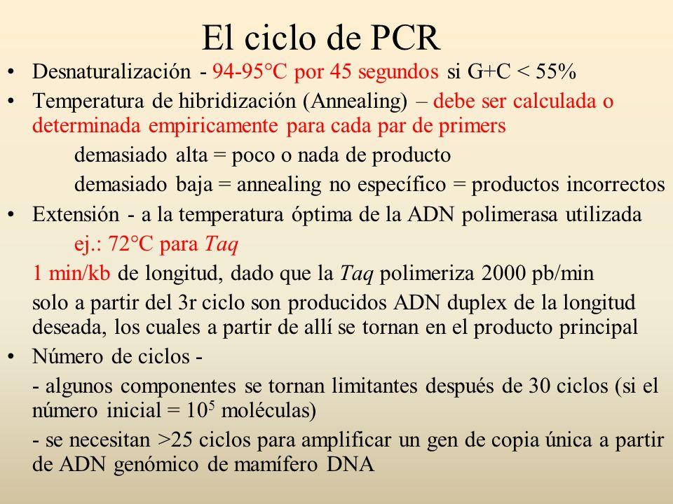 ADN molde (templado) Puede ser ssDNA o dsDNA (simple o doble cadena) ADN circular y cerrado es levemente menos efectivo que el ADN lineal Usualmente se utilizan varios miles de copias, ej: 1 µg de humano, 10 ng de levadura, 1 ng de bacteriano o 1 pg de plasmídico Se puede amplificar a partir de una sola molécula de ADN molde, pero las condiciones deben estar muy optimizadas