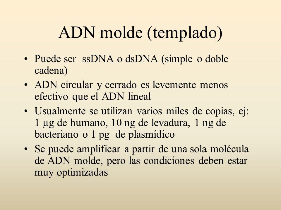 ADN molde (templado) Puede ser ssDNA o dsDNA (simple o doble cadena) ADN circular y cerrado es levemente menos efectivo que el ADN lineal Usualmente s