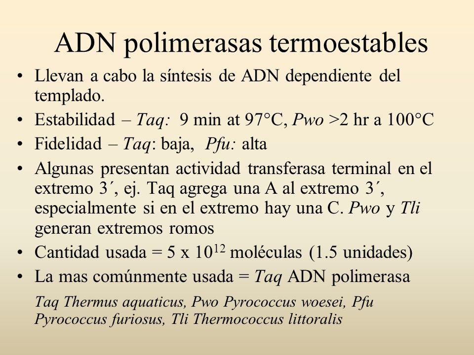 ADN polimerasas termoestables Llevan a cabo la síntesis de ADN dependiente del templado. Estabilidad – Taq: 9 min at 97°C, Pwo >2 hr a 100°C Fidelidad