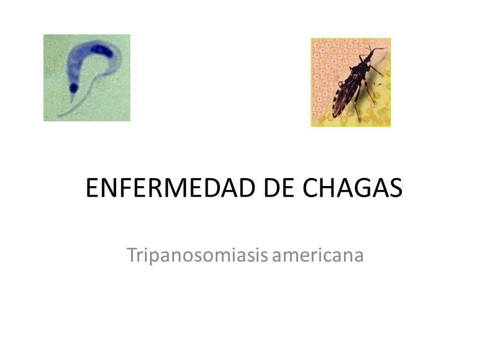Definición Es una zoonosis protozoaria causada por el hemoflagelado Trypanosoma cruzi y transmitida a los huéspedes vertebrados por insectos hematófagos de la subfamilia Triatominae, los triatomas.