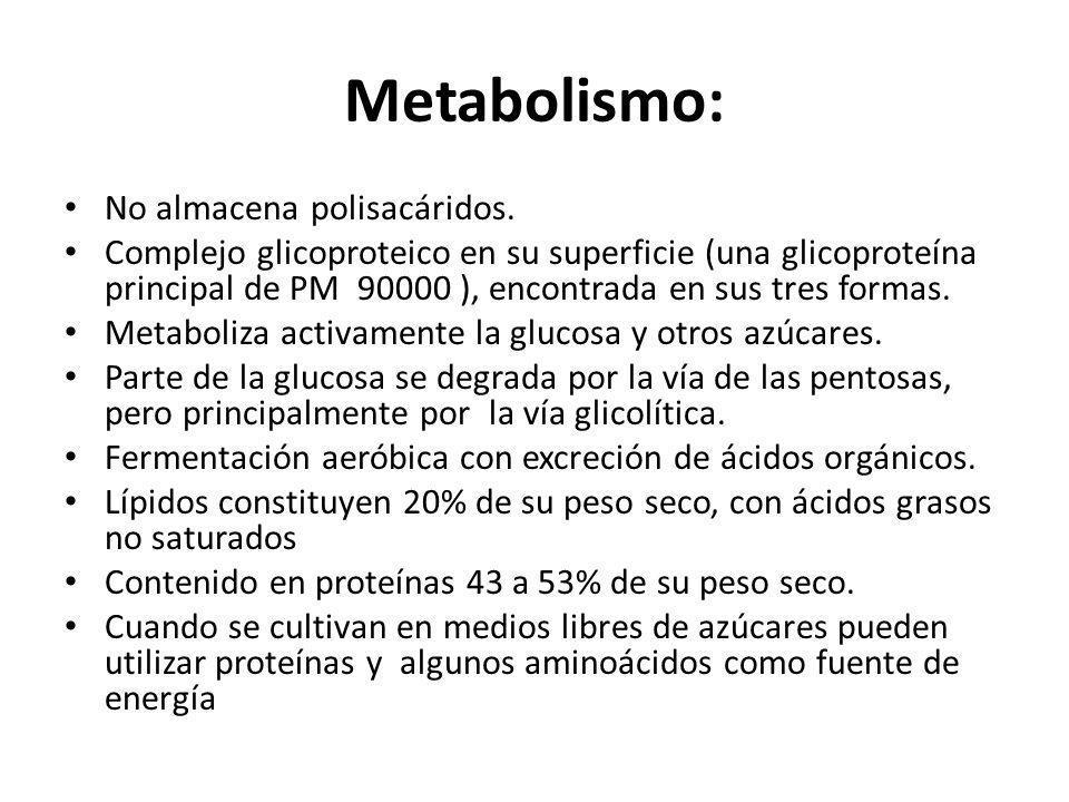 Metabolismo: No almacena polisacáridos. Complejo glicoproteico en su superficie (una glicoproteína principal de PM 90000 ), encontrada en sus tres for