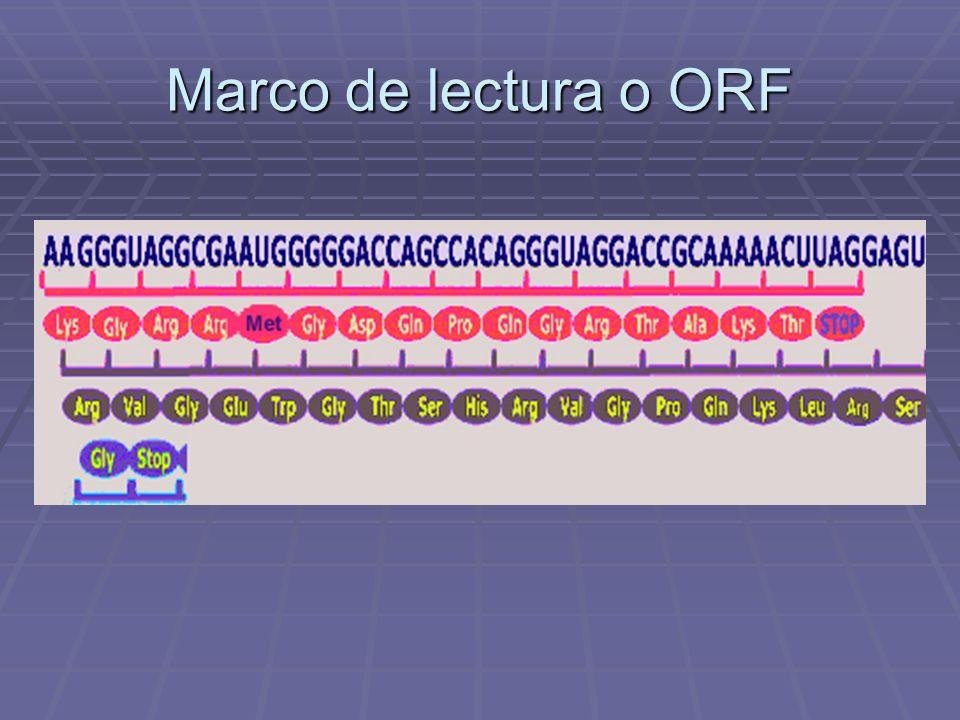 Marco de lectura o ORF