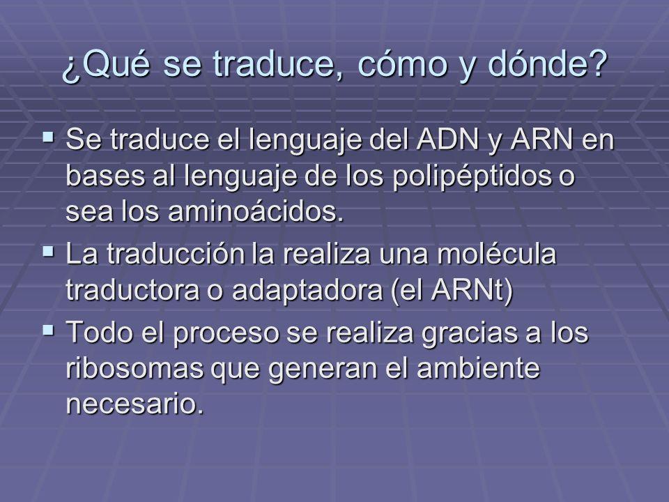 ¿Qué se traduce, cómo y dónde? Se traduce el lenguaje del ADN y ARN en bases al lenguaje de los polipéptidos o sea los aminoácidos. Se traduce el leng