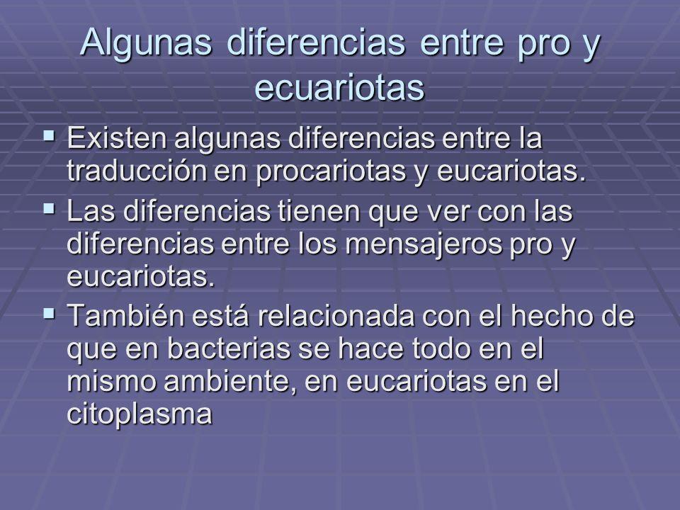 Algunas diferencias entre pro y ecuariotas Existen algunas diferencias entre la traducción en procariotas y eucariotas. Existen algunas diferencias en
