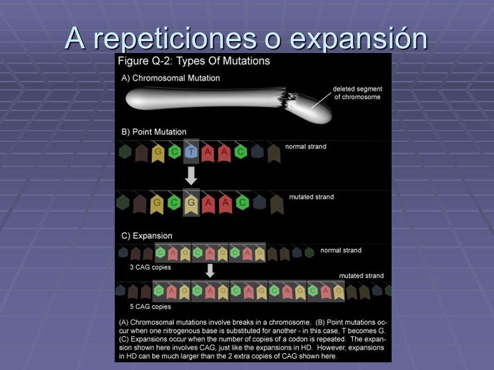 A repeticiones o expansión
