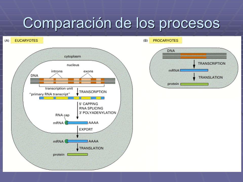 Comparación de los procesos