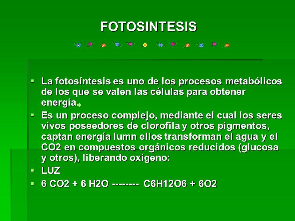 La fotosíntesis es uno de los procesos metabólicos de los que se valen las células para obtener energía. La fotosíntesis es uno de los procesos metabó