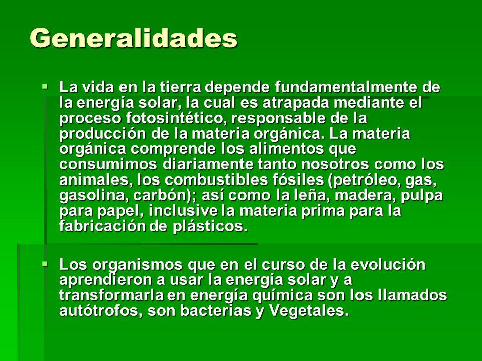 Generalidades La vida en la tierra depende fundamentalmente de la energía solar, la cual es atrapada mediante el proceso fotosintético, responsable de