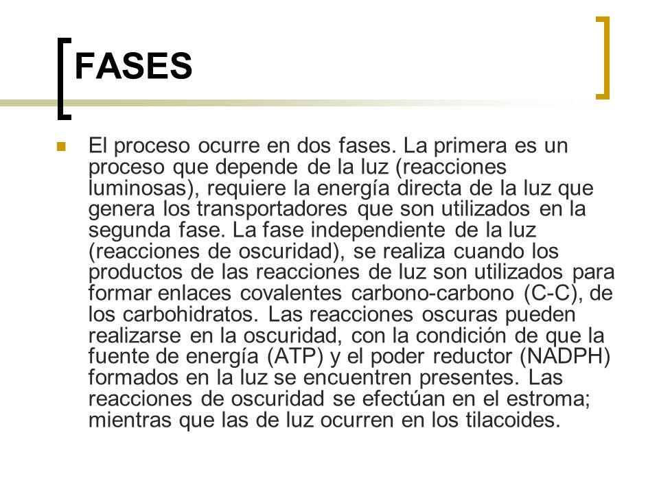 FASES El proceso ocurre en dos fases. La primera es un proceso que depende de la luz (reacciones luminosas), requiere la energía directa de la luz que