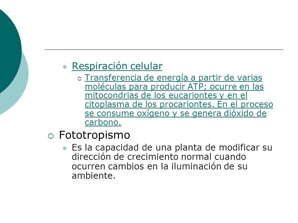 Respiración celular Transferencia de energía a partir de varias moléculas para producir ATP; ocurre en las mitocondrias de los eucariontes y en el cit